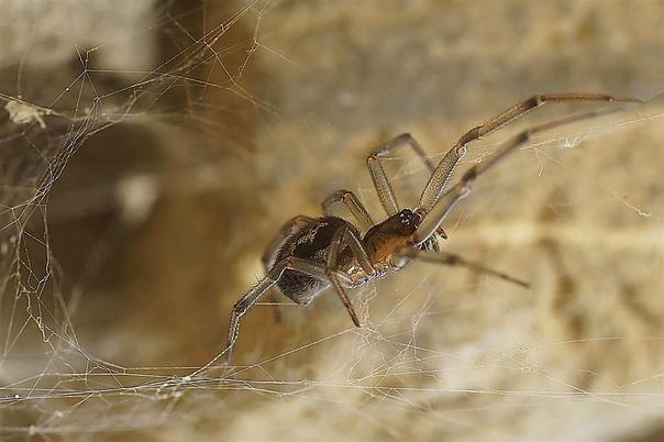 Consejos para eliminar las ara as de casa - Eliminar aranas en casa ...