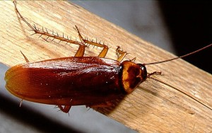 Los alérgenos de las cucarachas influyen en el asma infantil