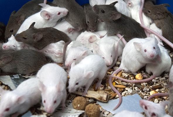 Cuidados esenciales para prevenir una plaga de ratones - Ratones en casa eliminar ...