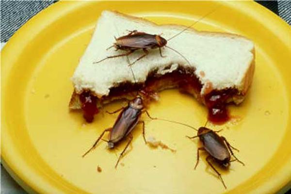 Consejos para eliminar las cucarachas voladoras - Eliminar hormigas cocina ...