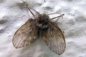 ¿Cómo eliminar las moscas de la humedad?
