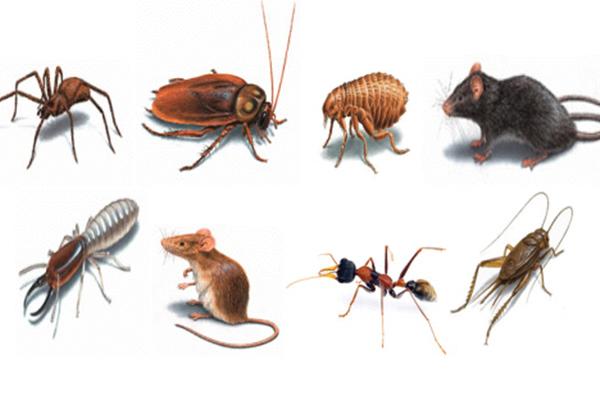 Cuidados b sicos para evitar plagas de insectos en la cocina - Eliminar hormigas cocina ...