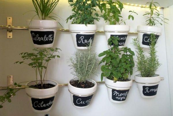 Plantas arom ticas un medio ecol gico para combatir plagas - Plantas en la cocina ...