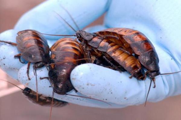 C mo prevenir las plagas de cucarachas - Como eliminar ratones en el hogar ...
