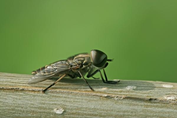 Remedios caseros para eliminar las moscas por completo