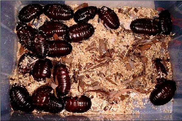 S ntomas de que tu casa puede tener una plaga de cucarachas - Plaga hormigas en casa ...
