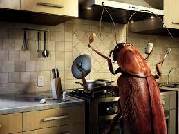 eliminar_cucarachas_cocina