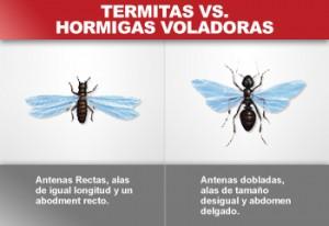 termitas-hormigas-voladoras