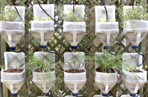 Formas naturales para mantener a los insectos fuera de tu casa