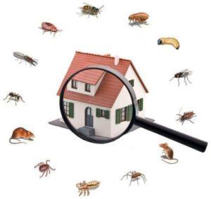 Las plagas comunes que invaden los hogares en invierno