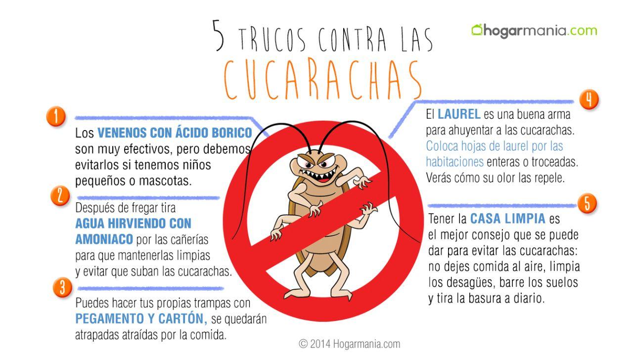 Las plagas comunes que invaden los hogares en invierno - Como terminar con las hormigas en casa ...